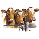חלב פרה מלא אמיתי - כמו פעם