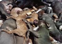 """ביטול חוק """"הכלבים המסוכנים"""" עכשיו !!!"""