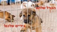 גורלם של הכלבים הנטושים בחדרה והסביבה