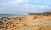 עצומה למען חוף חופשי