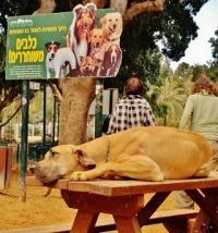 גינת כלבים בשכונת רמות צהלה, תל אביב