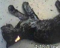 החמרת הענישה על המתעללים בבעלי חיים