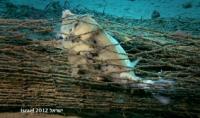 הוצאת רשתות אשר לא משמשות לדייג ממימי מפרץ אילת