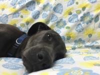 גן כלבים לשכונות הסובבות את אוניברסיטת בן-גוריון