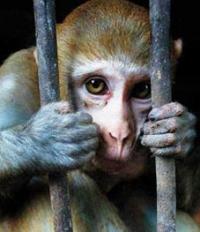 """תומכים במדיניות """"אל-על"""" לא להטיס בעלי-חיים לניסויים"""