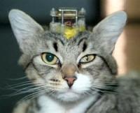 לעצור ניסוי בחתולים באוניברסיטת בן-גוריון