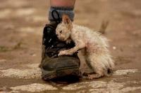 מתנגדים להחלטת השר להפסקת מימון עיקור וסירוס חתולי רחוב