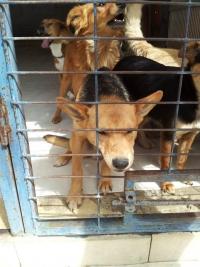 נגד המתת כלבים וחתולים בישראל